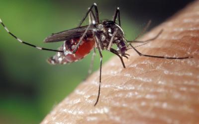 Des piqûres d'insectes : que faire ?
