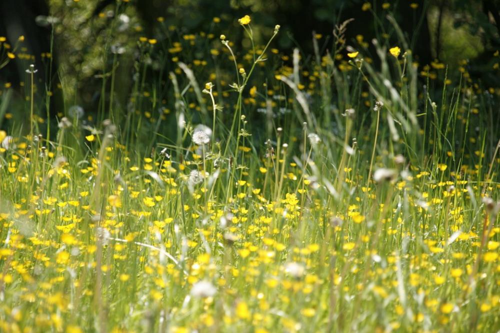 Les nombreuses allergies saisonnières sont de retour!